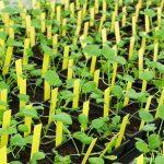 Méthodes de sélection modernes pour la création de nouvelles variétés végétales