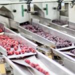 Enjeux technologiques et santé du minimal processing