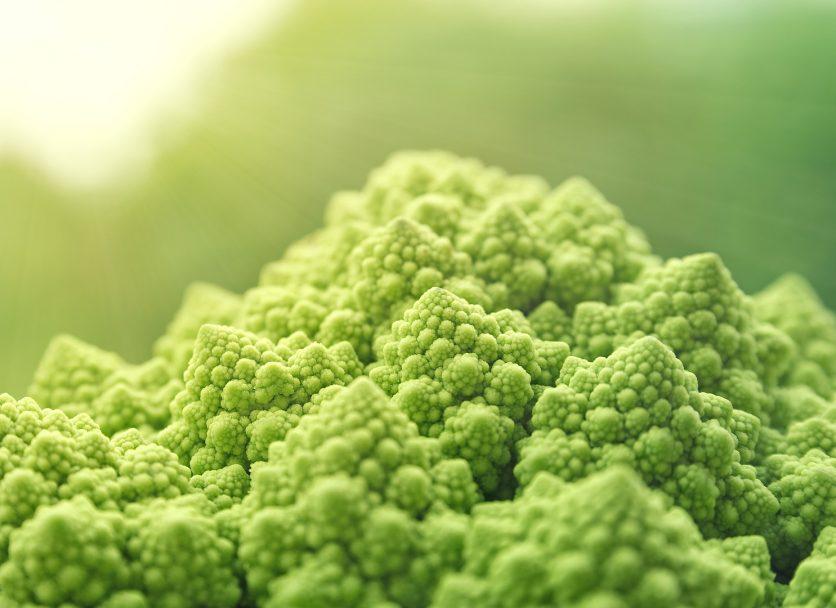 Quels repères alimentaires pour les végétariens ?